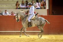 QCM sur les chevaux