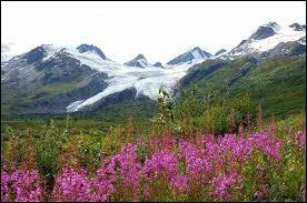 Comment pourrait-on décrire les paysages de l'extrême nord de l'Alaska ?