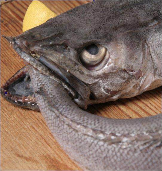 Le poisson à la sauce verte > Un grand classique : un court-bouillon, des pommes de terre bouillies, une sauce verte. Et c'est presque meilleur froid, le lendemain (s'il en reste ! ). Quel est le poisson le plus couramment utilisé pour ce plat rustique ?