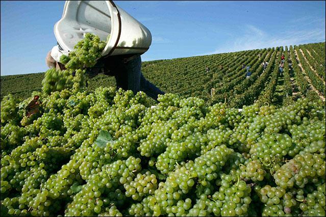 Si vous aimez les vins de Bourgogne, servez avec un ------.