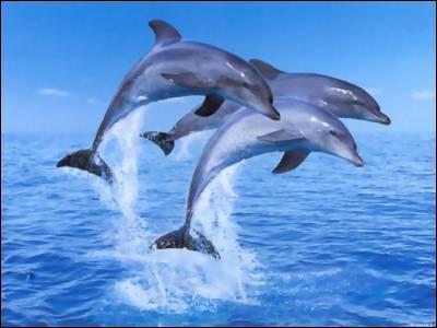 Comment s'appelle un groupe de dauphins ?