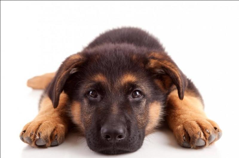 """Pourquoi dit-on parfois : """" une vie de chien """" , """"ne me parle pas comme un chien """" …"""
