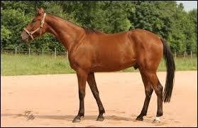 La carrière d'un cheval de course se termine vers 10 ans ou plus.