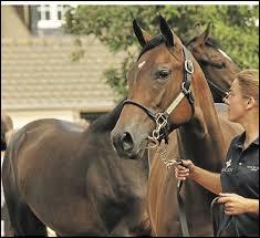 Les chevaux qui étaient brillants vont à l'abattoir à la fin de leur carrière.