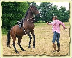 Le début du dressage d'un jeune cheval est le débourrage, période durant laquelle il apprend à être monté et à porter une bride et une selle.