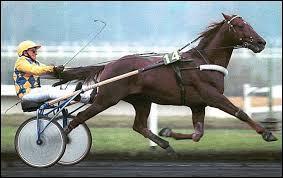 Un trotteur peut devenir cheval de course de galop.