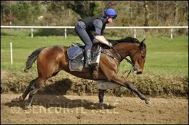 En phase d'entraînement, les chevaux courent des distances variant entre 800 et 2000 mètres.