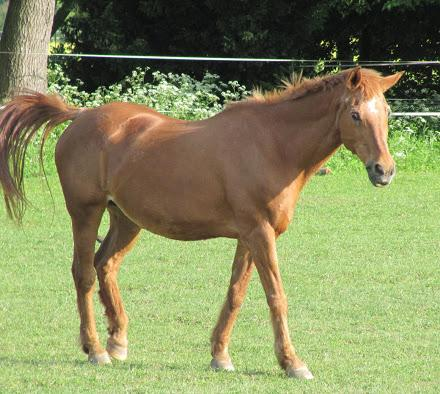 Vrai ou faux : la vie d'un cheval de course