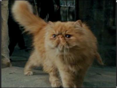 Comment s'appelle son chat orange ?