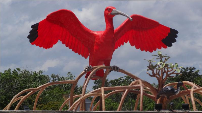 Cet oiseau est très présent dans les mangroves du bord de mer en Amazonie, ne le confonds pas avec les deux autres !