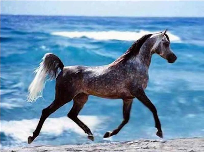 De ces trois produits, lequel est utilisé dans l'alimentation et les soins des chevaux de course ?