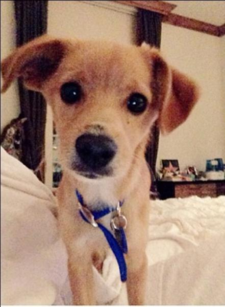 Quel est le nom du chien d'Ariana ?