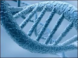 Quelle est l'une des caractéristiques de l'ADN ?