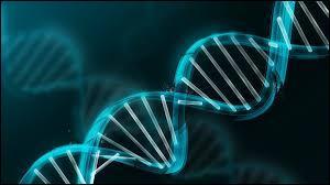 Qu'est-ce que l'ADN ?