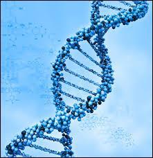 Lequel de ces termes désigne la base du nucléotide T ?