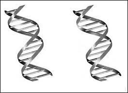 Que peut-on dire des brins constituant les nucléotides ?