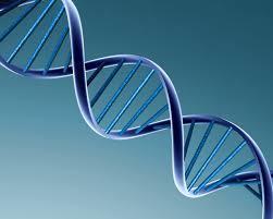 Sciences : l'ADN en général !