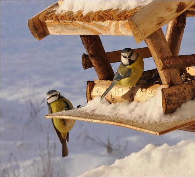 Il faut toucher le moins possible aux mangeoires des oiseaux de votre jardin !