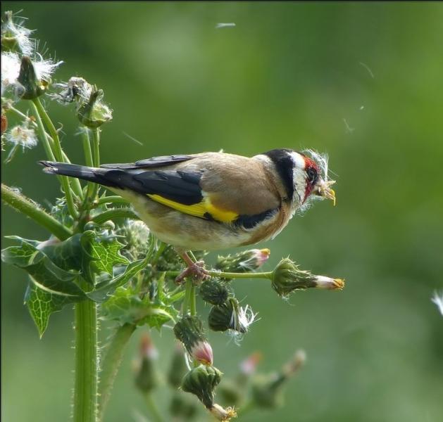 Il faut toujours laisser pour les oiseaux un petit coin sauvage dans son jardin !