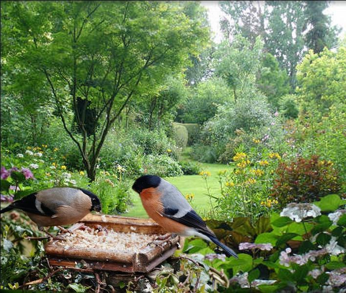 Ils faut différents étages de végétation, pour que notre jardin attire les oiseaux !