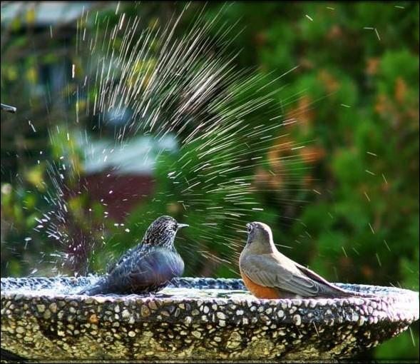 Une soucoupe pleine d'eau est l'abreuvoir idéal !