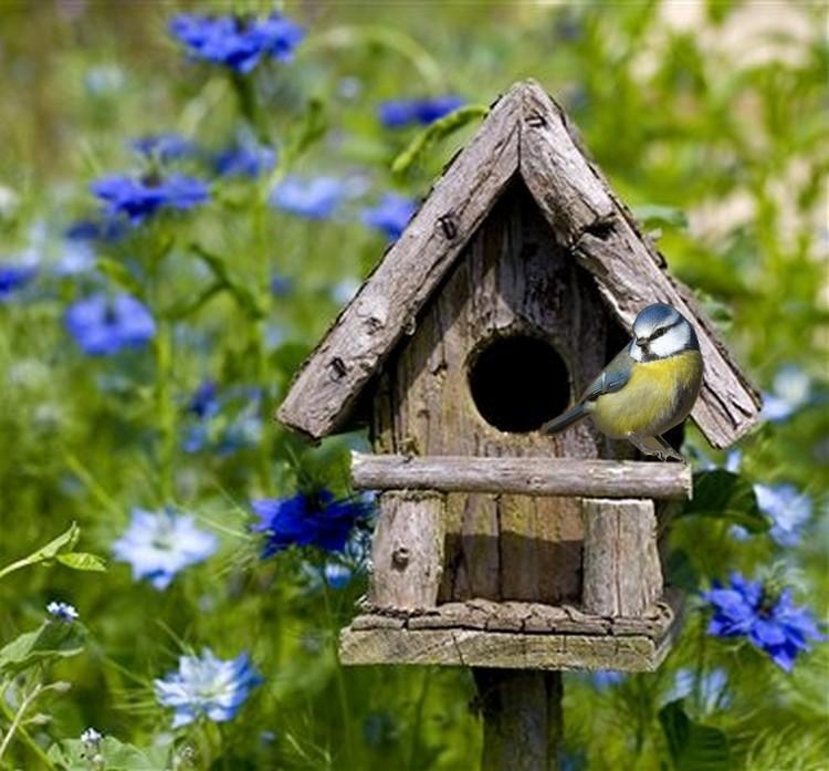 Mon jardin accueille les oiseaux