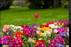 Oh ! Qu'elles sont belles, ces fleurs ! La photo a été prise :