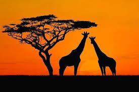 Les plus belles photos de paysages