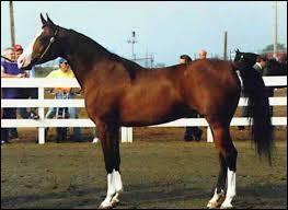 Le cheval est un :