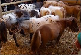 """Quelle est la bonne orthographe du mot """"cheval"""" au pluriel ?"""