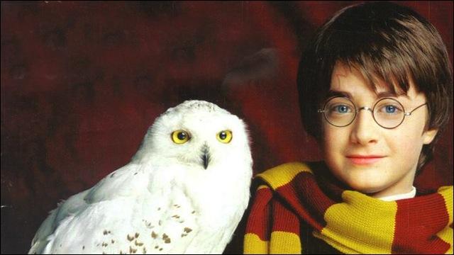 De quelle race est l'oiseau de Harry ?