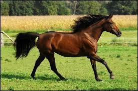 ...... cheval galope très vite.