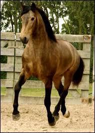 A cheval, la ..... est indispensable