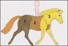 Nommez les 3 grandes parties du cheval présentées sur la photo
