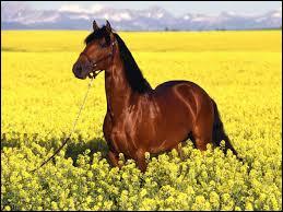Quel est le nom de la robe sur le cheval ci-dessous ?