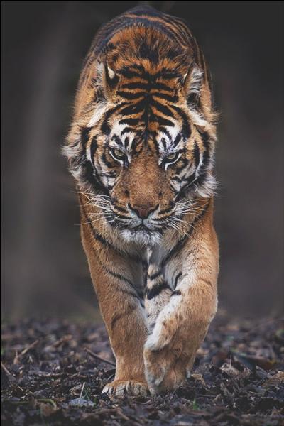 Trouvez le nom d'une marque célèbre grâce à cet animal !