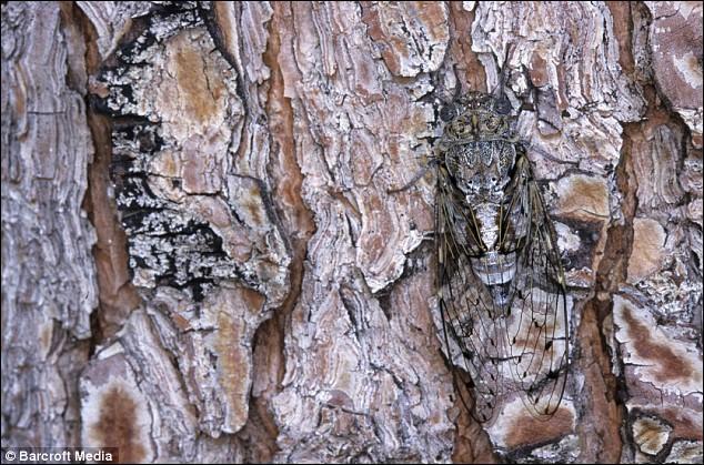 Vous chantiez, j'en suis fort aise, mais allez-vous reconnaître cet insecte ?