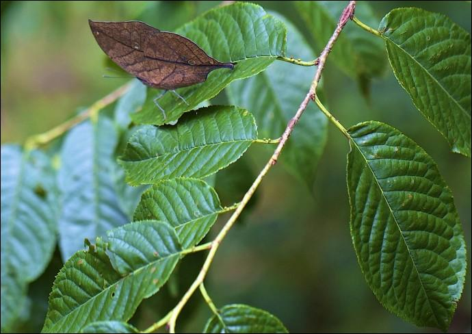 Ces feuilles sont spéciales, car l'une d'elles n'est pas végétale, c'est un insecte...