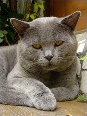 """1er janvier 1560 : décès de ..., membre de la Pléiade, auteur du recueil de poèmes """"Les Regrets"""". Qui a écrit """"Épitaphe d'un chat"""" après la mort de son petit chat """"Belaud"""" ?"""