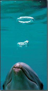 Qui est l'écrivain romain vers 77 ap J.C, qui désigna le dauphin comme  le chanteur de la mer . ?