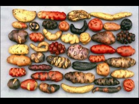 Ce pays en possède plus de 1200 variétés !