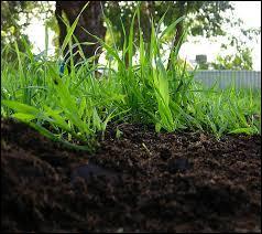 Quel adjectif se rapporte à la décomposition des matières végétales ?