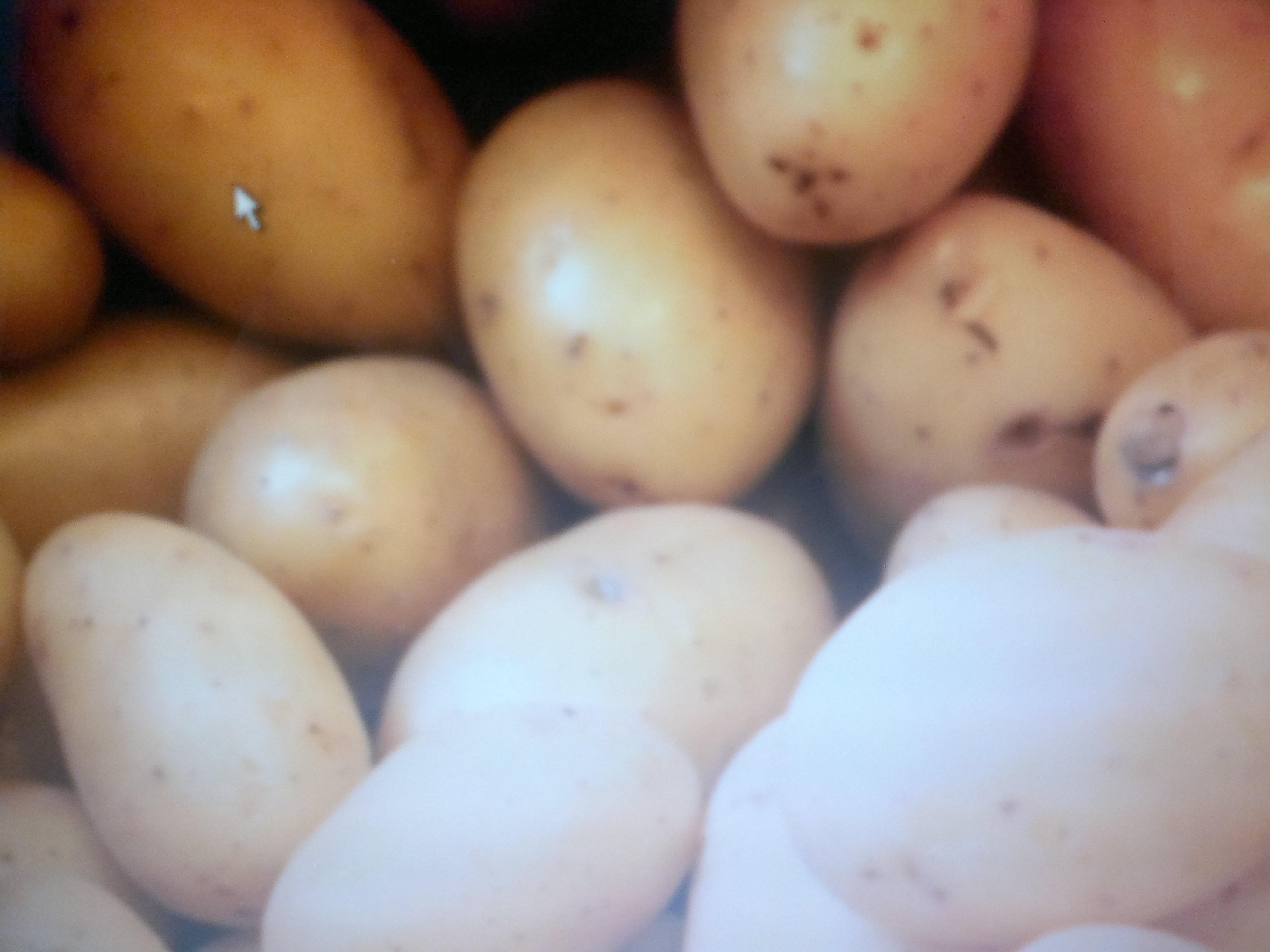 Autour de la pomme de terre
