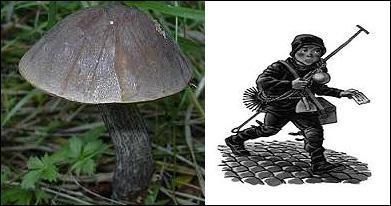 quizz ne37 poussez sur le champignon c 39 est facile quiz nature. Black Bedroom Furniture Sets. Home Design Ideas