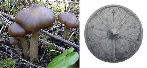 Quizz ne37 poussez sur le champignon c 39 est facile for Portent en eux