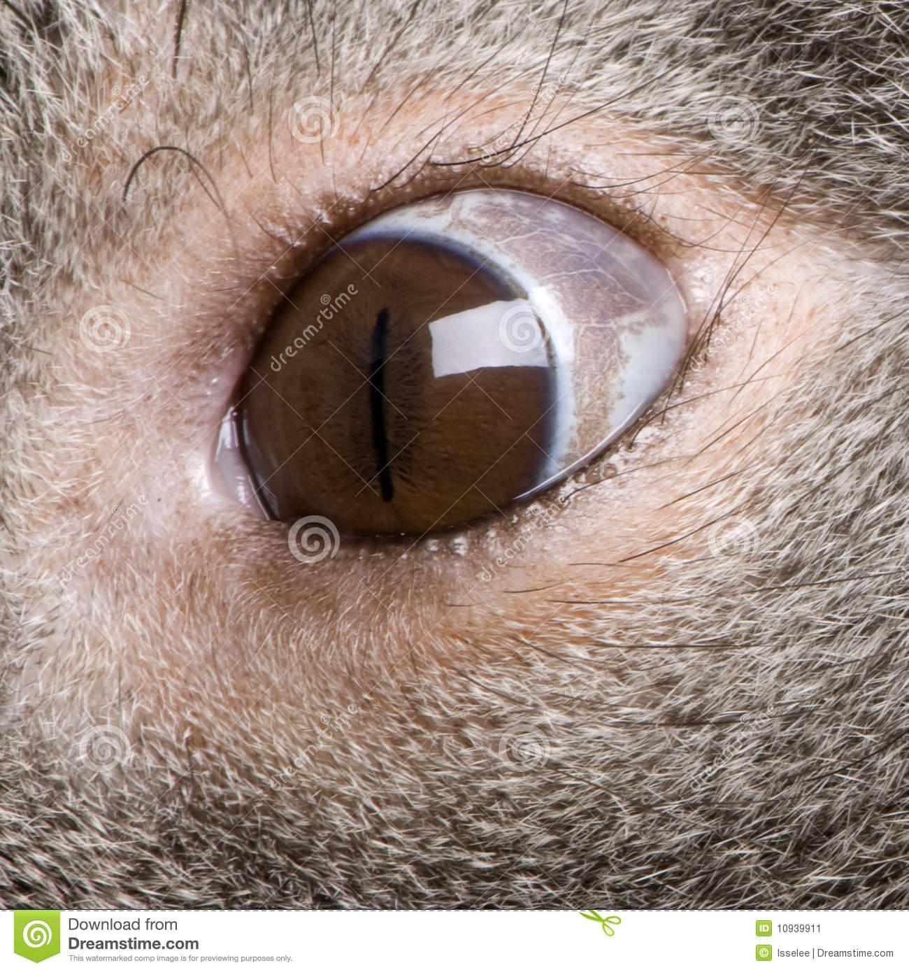 As-tu un oeil de lynx ? 6