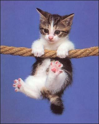 Le retournement des chats lors d'une chute est dû à :