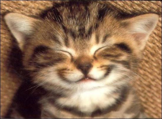 Le chat ronronne :