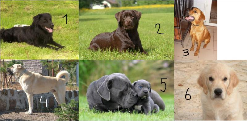 Comment s'appellent les différentes couleurs des chiens ?