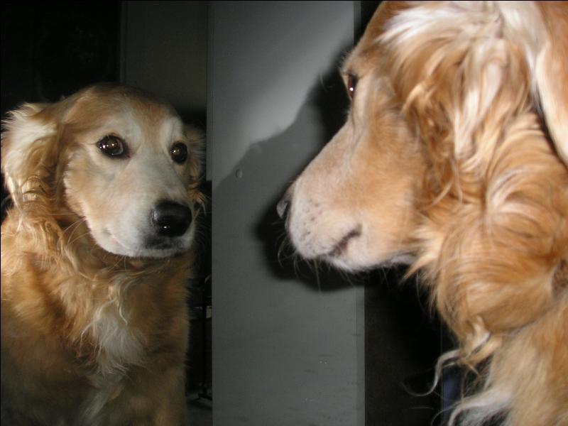 Le champ de vision du chien est d'environ :